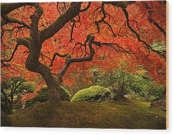 Magical Tree Wood Print by Bjorn Burton