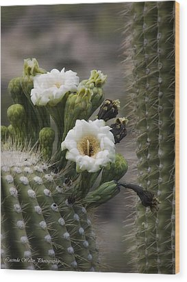 Wood Print featuring the photograph Magnificant Bloom Of The Saguaro by Lucinda Walter