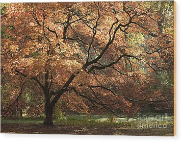 Magnificent Autumn Wood Print by Anne Gilbert