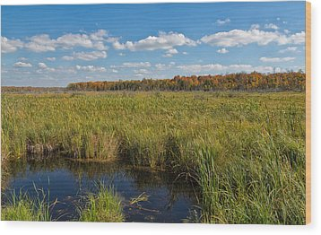 Magnificent Minnesota Marshland Wood Print