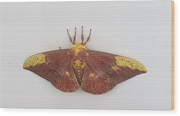 Magnificent Moth Wood Print