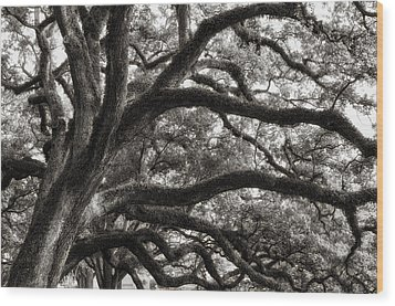 Wood Print featuring the photograph Magnificent Oaks Of Louisiana by Photography  By Sai