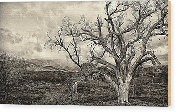 Magnificent Shoe Tree Near San Felipe Road Wood Print by Ron Regalado