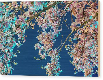 Magnolia-greenlight Wood Print by Susan Cole Kelly Impressions