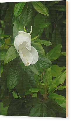 Wood Print featuring the photograph Magnolia 1 by Suzanne Powers