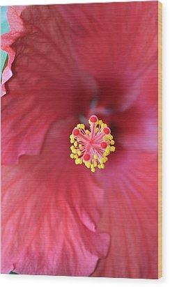 Magnolia 5  Wood Print