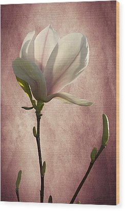 Wood Print featuring the photograph Magnolia by Ann Lauwers