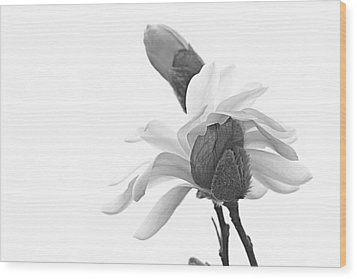 Wood Print featuring the photograph Magnolia Bloom 1 by Tammy Schneider