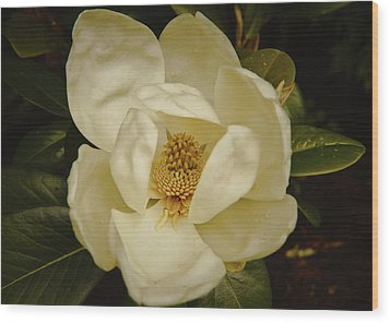 Wood Print featuring the photograph Magnolia Bloom by Debra Crank