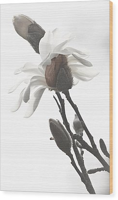Wood Print featuring the photograph Magnolia Bloom by Tammy Schneider