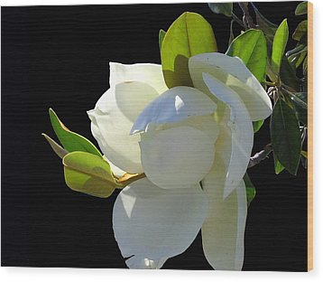 Magnolia Blossom Wood Print by Ginny Schmidt