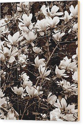'magnolia Blossoms' Wood Print