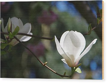 Magnolia Blossoms Wood Print by Marilyn Wilson