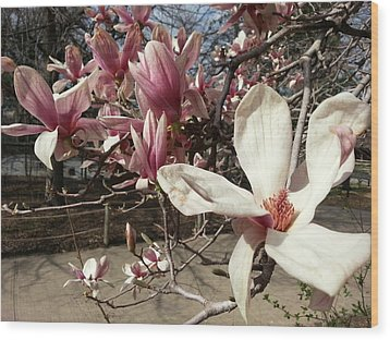 Wood Print featuring the photograph Magnolia Branches by Caryl J Bohn