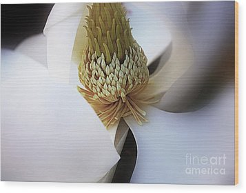Magnolia Close Up Wood Print by John S