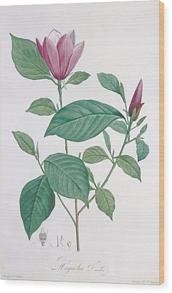 Magnolia Discolor Engraved By Legrand Wood Print by Henri Joseph Redoute