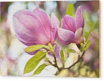 Magnolia Flowers Wood Print by Crystal Hoeveler
