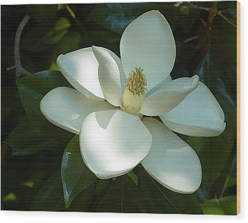 Magnolia Wood Print by Frank Tozier