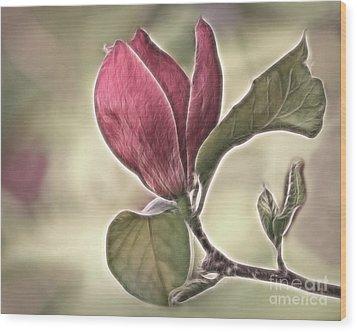 Magnolia Glow Wood Print by Susan Candelario