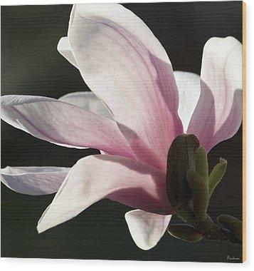 Magnolia II Wood Print by Michael Friedman