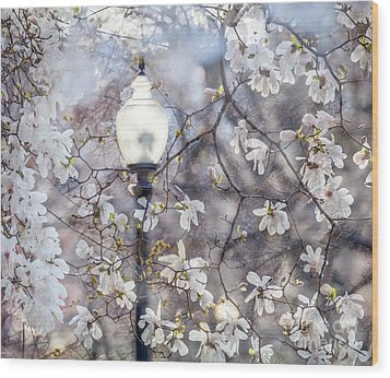 Magnolia Impression Blend Wood Print by Susan Cole Kelly Impressions