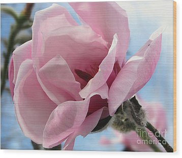 Magnolia In Spring Wood Print by Jola Martysz