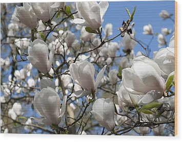 Wood Print featuring the photograph Magnolia by Lana Enderle
