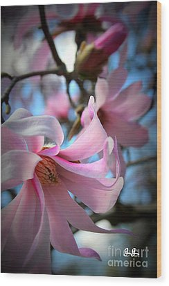 Magnolia Morning Wood Print
