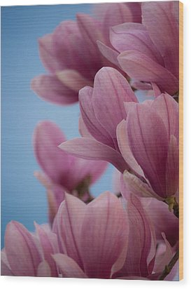 Magnolia On Blue Sky Wood Print by Rob Amend