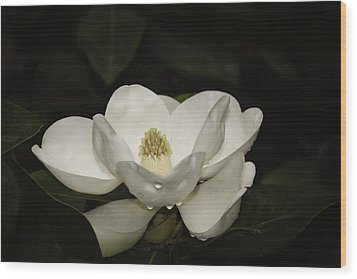 Wood Print featuring the photograph Magnolia by Penny Lisowski