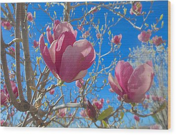 Magnolia Tree Blossoms 2 Wood Print