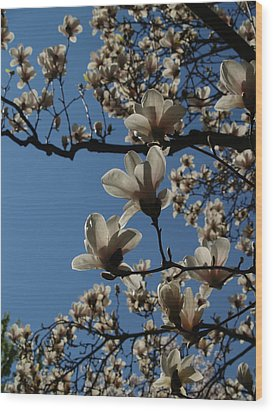 Magnolia Tree Wood Print by Rita Haeussler