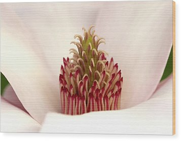 Magnolia's Carpel Crown Wood Print
