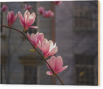Magnolia's Descent Wood Print by Rob Amend