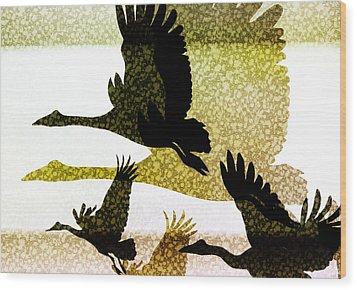 Magpie Geese In Flight Wood Print by Holly Kempe