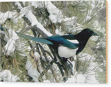 Magpie In The Snow Wood Print