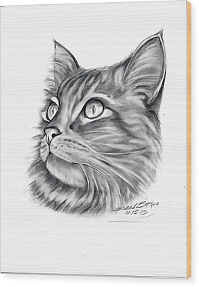 Maine Coon Wood Print by Barb Baker