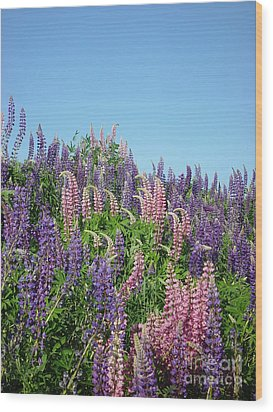 Maine Lupine Wood Print by Christopher Mace