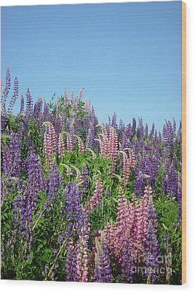 Maine Lupine Wood Print