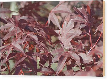 Maine Maple Leaves Wood Print by Lena Hatch