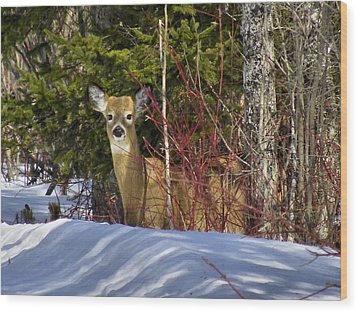 Maine Wildlife 2 Wood Print by Gene Cyr