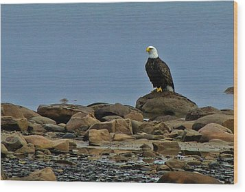Majestic Bald Eagle Wood Print by Rhonda Humphreys