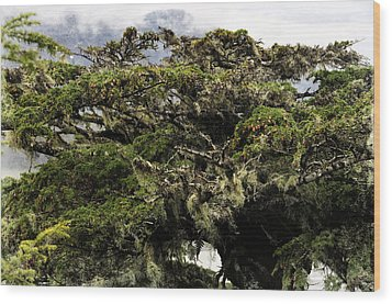 Wood Print featuring the photograph Majestic Branches by Davina Washington