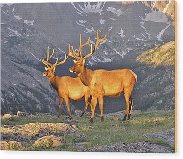 Wood Print featuring the photograph Majestic Elk by Diane Alexander