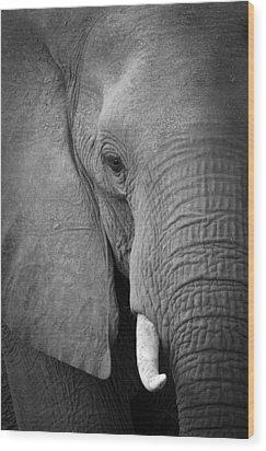 Majestic Giant Wood Print by Alison Buttigieg