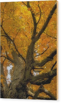 Wood Print featuring the photograph Majestic Maple by Gary Hall