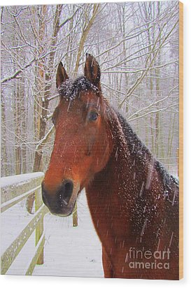 Majestic Morgan Horse Wood Print