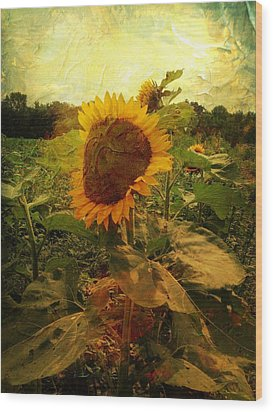 Majestic Sunflower  Wood Print