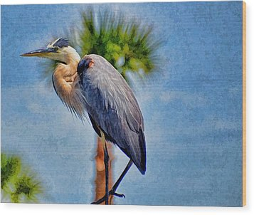 Majestic Tri-colored Heron Wood Print by Pamela Blizzard