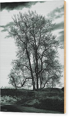 Wood Print featuring the photograph Majesty by Lauren Radke